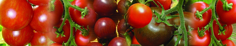 Tomatenbalken1